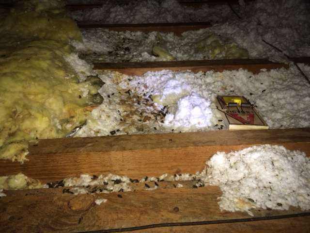 Mouse Proof Insulation : Insulation commercial and residential